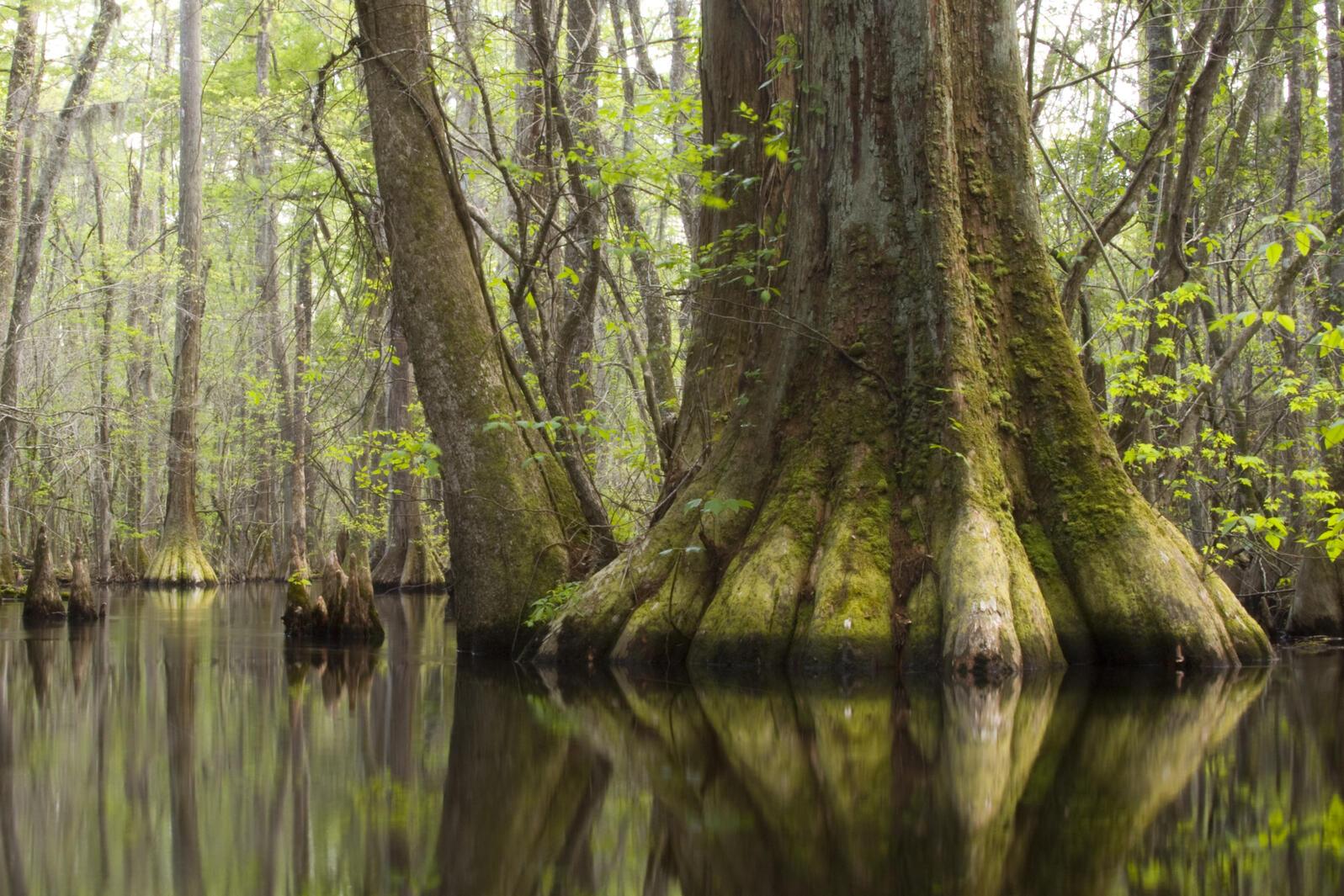 Beidler Forest, Mac Stone