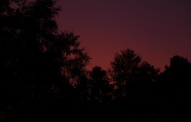 Nightwalk at Beidler Forest