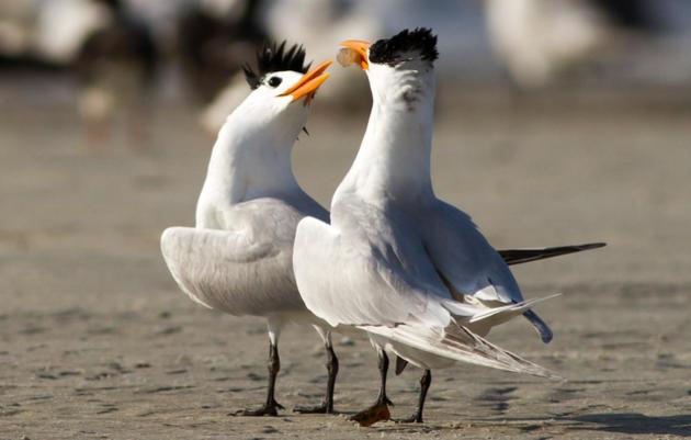 Birds in the News