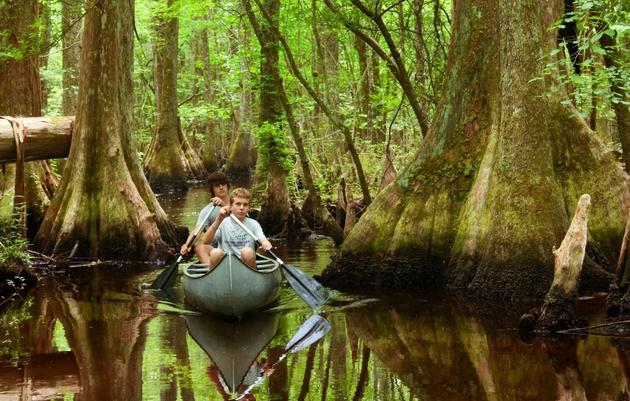 Audubon's Francis Beidler Forest