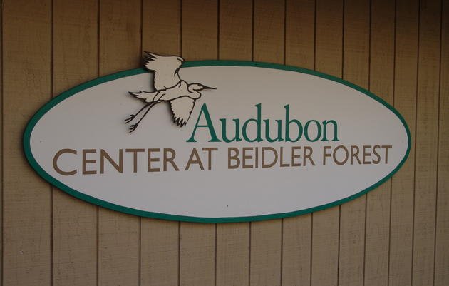 Beidler Forest Visitor Information