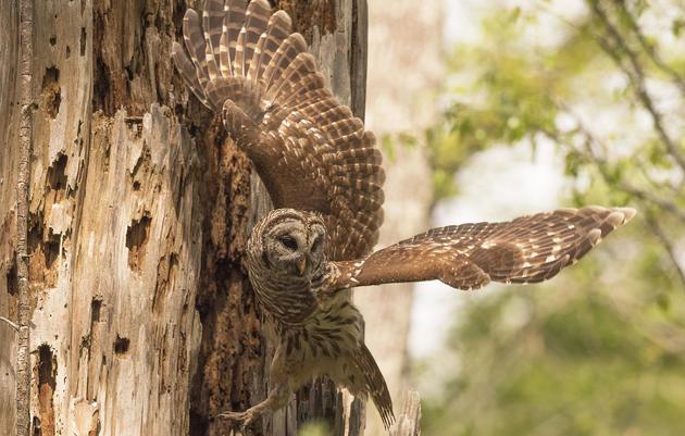 Audubon South Carolina Photography Pass