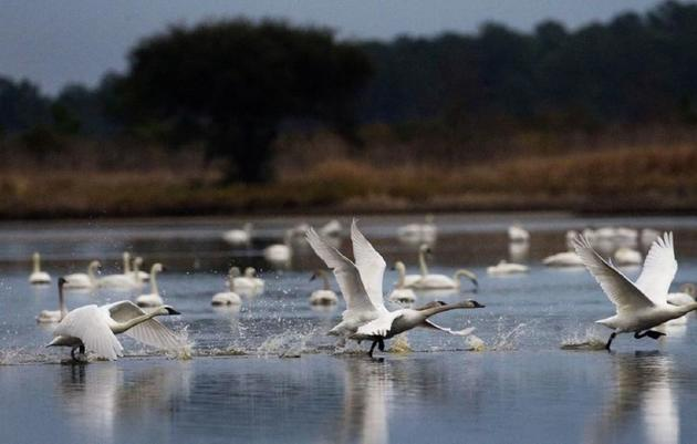 50 bird species could vanish from SC by 2100 as global climate warms, new report suggests