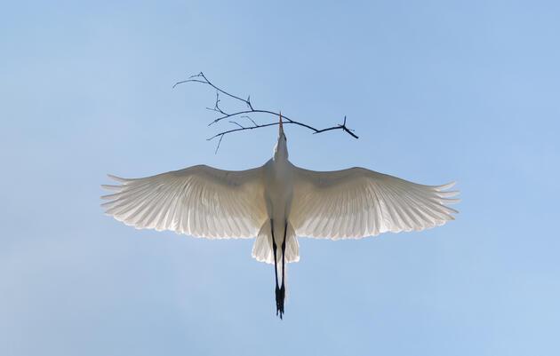 Audubon South Carolina - Year in Review