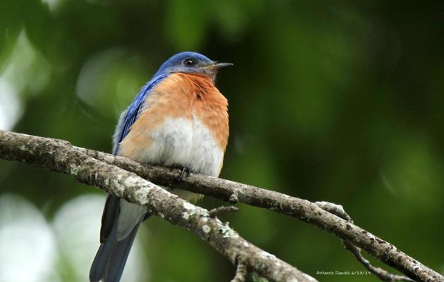 Home Habitats: How native plants provide the landscapes  that help birds and butterflies thrive