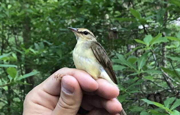 Leading the Way on Bird and Climate-Friendly Forestry
