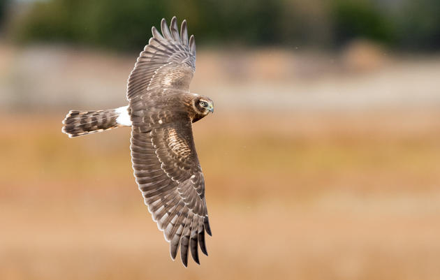 ASC Christmas Bird Count 2019