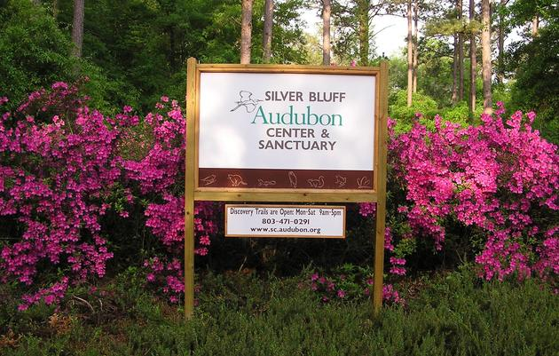 Silver Bluff Visitor Information