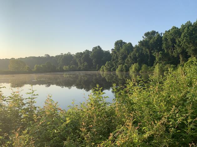 Kathwood Ponds