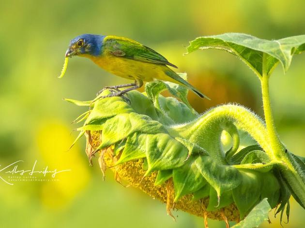 Using Bird Calls Ethically
