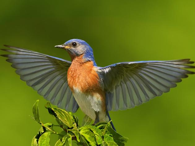 Help Birds Weather Climate Change