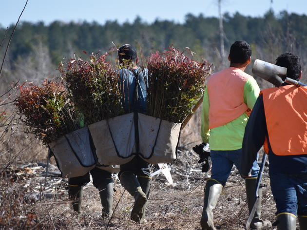 Audubon South Carolina plants 215,000 native seedlings to improve storm water management, naturally regenerate South Carolina landscapes