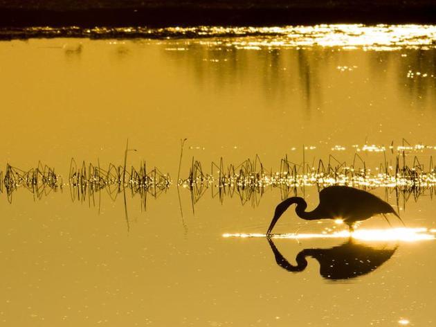Audubon South Carolina Releases 2020 Policy Agenda