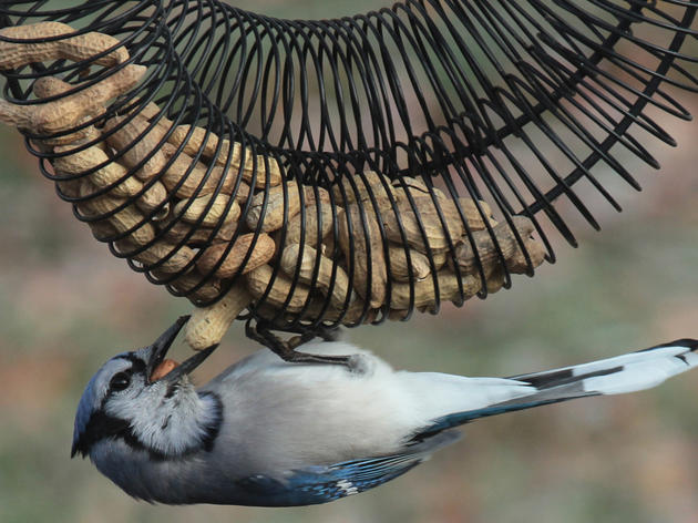 More Than a Hobby: Bird Feeding Connects People, Helps Wildlife