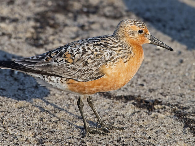 Fighting for the Protection of Vulnerable Coastal Bird Species