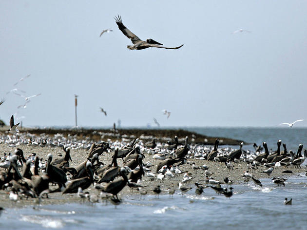 Audubon South Carolina Urges Beachgoers to Avoid Shorebirds and Their Nests