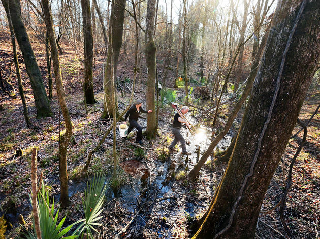 Conservation Efforts at Four Holes Swamp Could Impact How Charleston Grows
