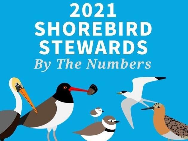 End-of-Season Update: Stewards 2021