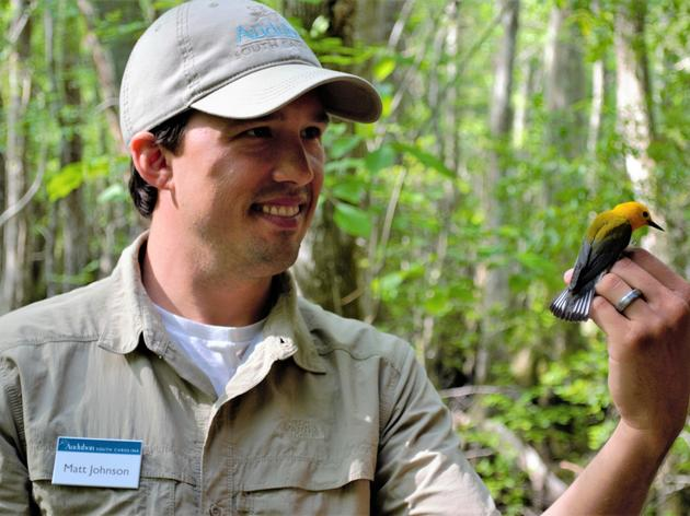 Geolocators Provide Clues About Prothonotary Warblers, and How to Protect Them
