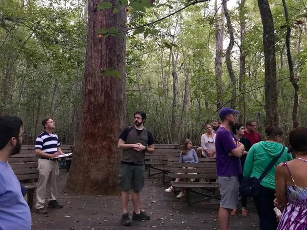 Francis Beidler Forest celebrates 50 years