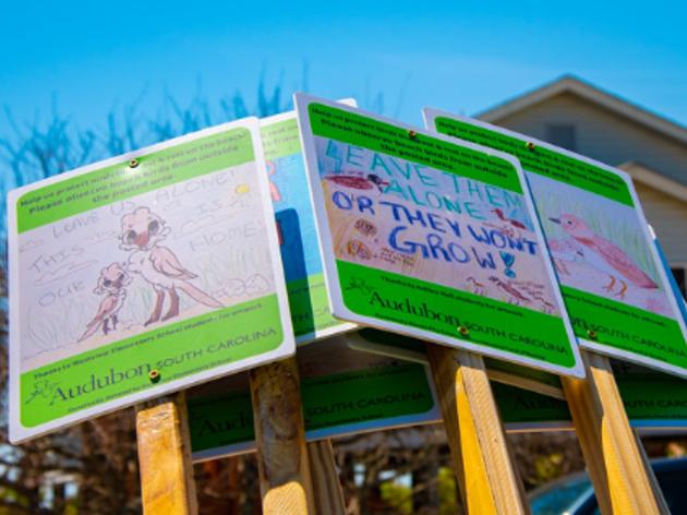 Elementary School Students Protect Beach Wildlife