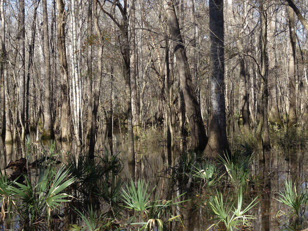 Berkeley County is home to some of the Lowcountry's most magnificent natural resources