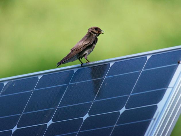 Audubon South Carolina Praises House Committee Vote on Solar Energy and Urges House of Representatives to Pass Energy Freedom Act