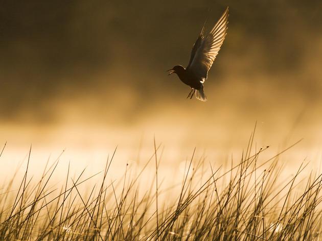 Wetlands Mitigation