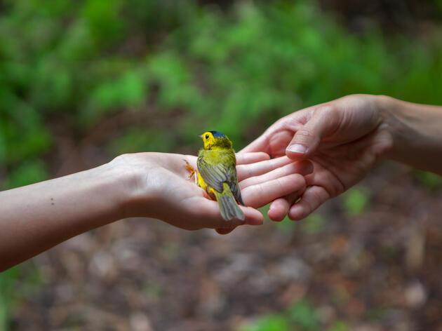Audubon South Carolina's WINGS Internship and Seasonal Staff Program