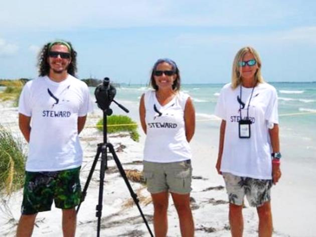 Shorebird Stewards