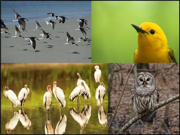 Audubon South Carolina Calendar Photo Contest Official Rules