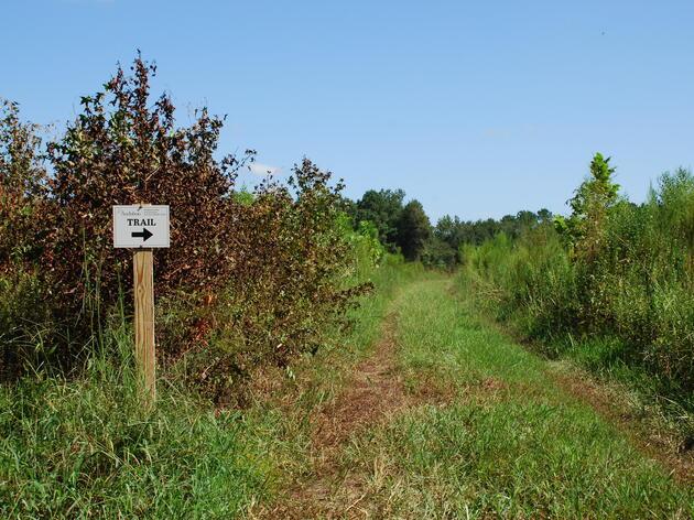 The New Grassland-Woodland Trails at Beidler Forest