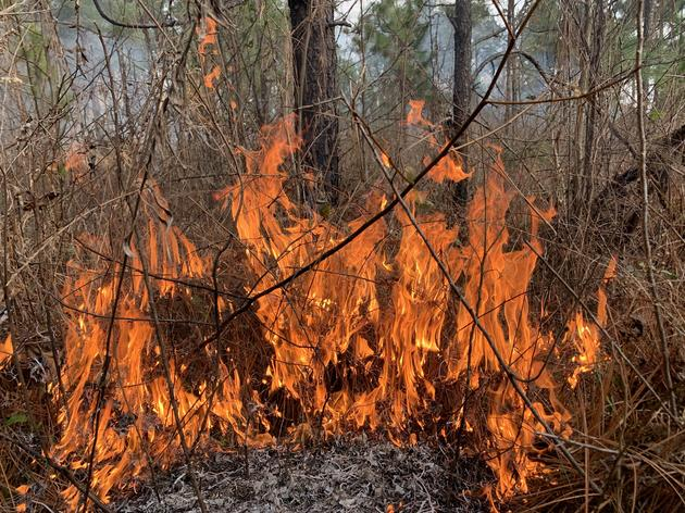 Fighting Fire With (Prescribed) Fire