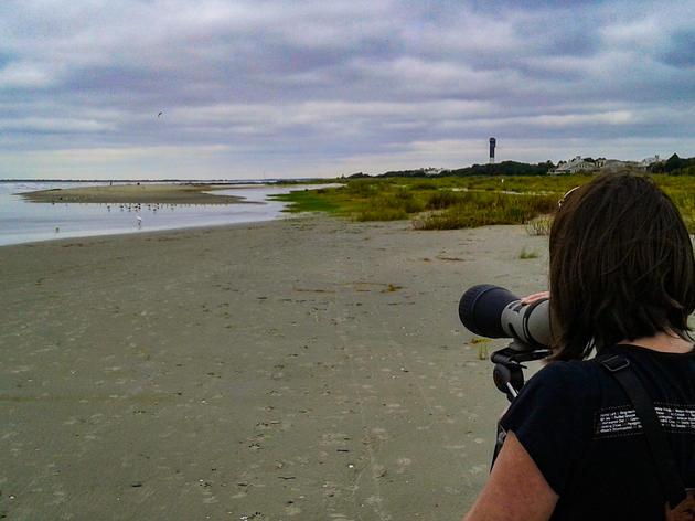 International Shorebird Survey