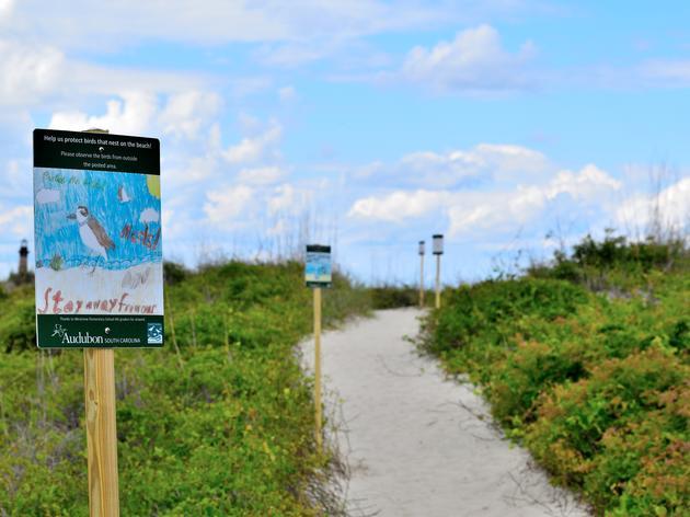 Kids Help Protect Coastal Shorebirds