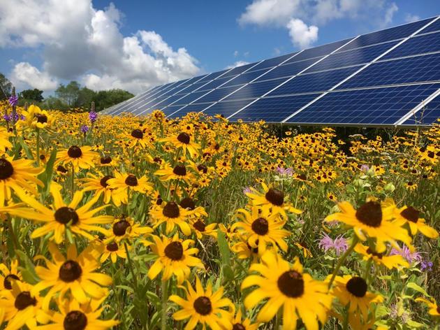 Native & Solar Policy
