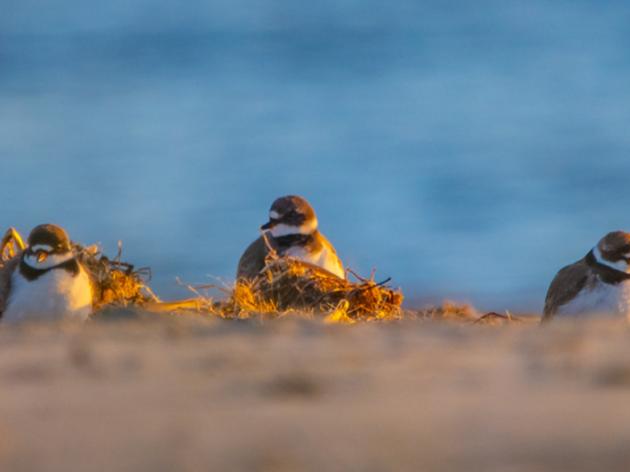 Audubon South Carolina's Leadership Team is Growing