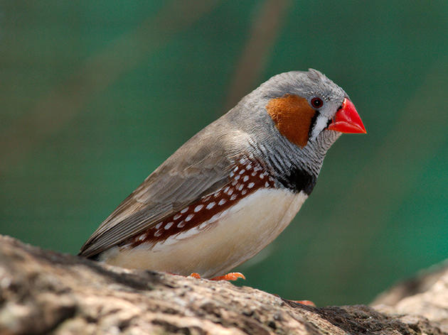 Birds Measure Magnetic Fields Using Long-Lived Quantum Coherence