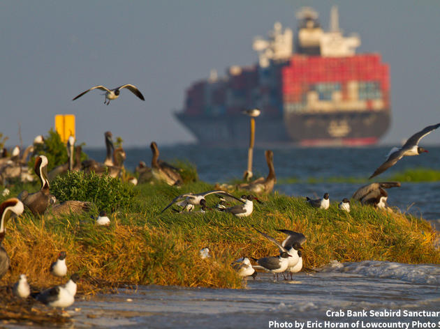A ray of hope for Crab Bank and coastal birds