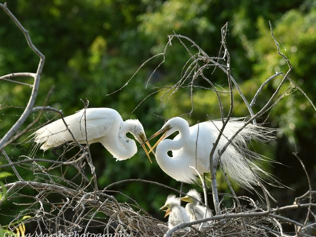 Eggs to Egrets