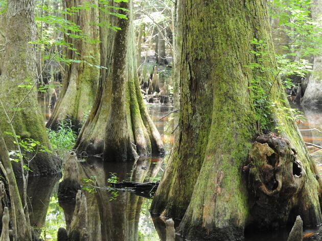 Audubon Center & Sanctuary at the Francis Beidler Forest