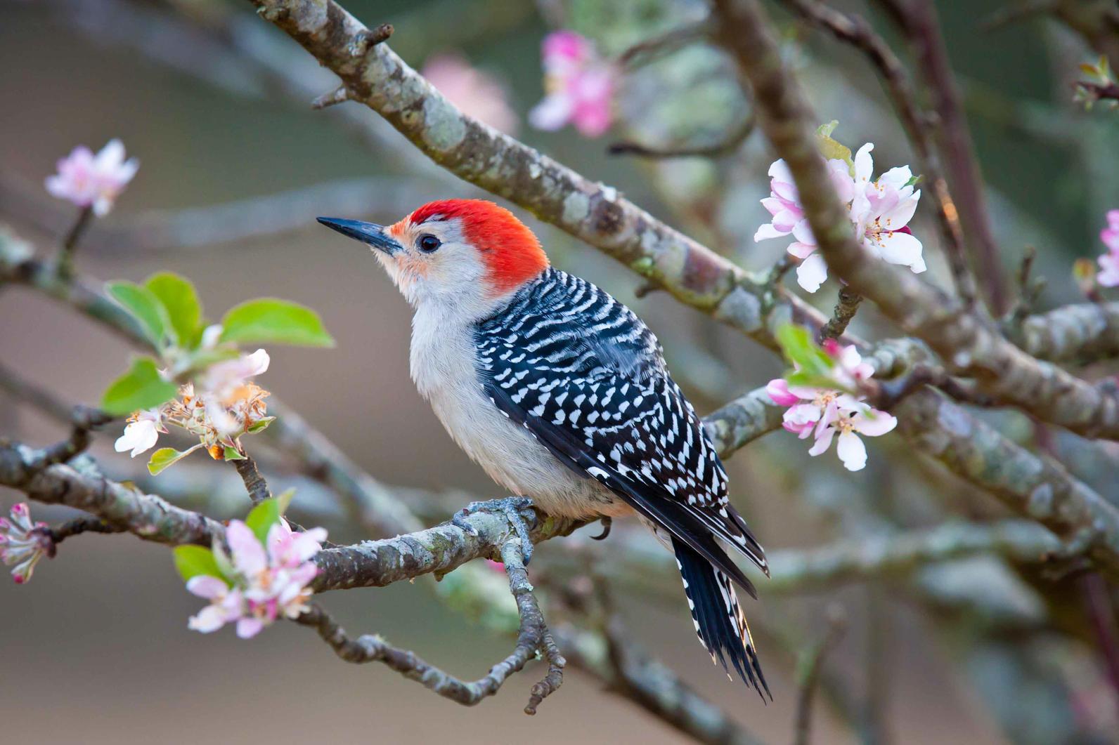 Birds Of BIRDS