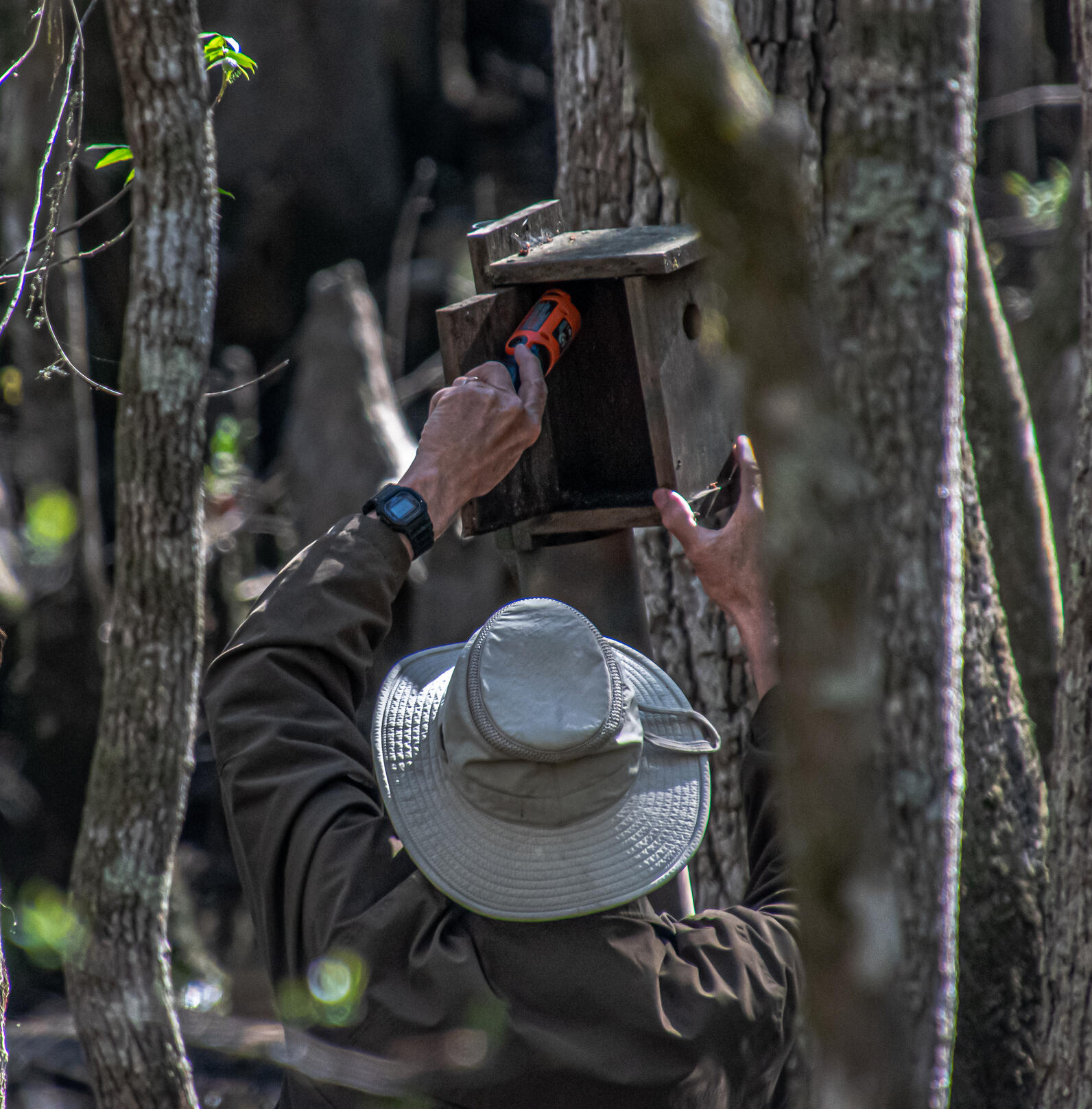 A man is using the orange handle of a screwdriver to clean out any debris in a wooden bird box, painted with camouflage in a swamp. He is wearing a beige hat and brown jacket,
