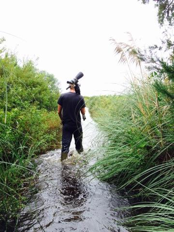 Shorebird Survey during the October 2015 flood