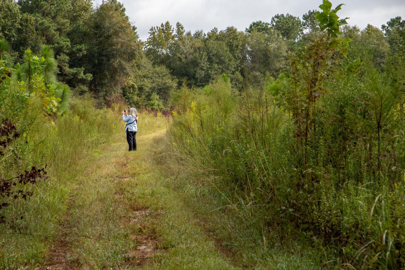 New Grassland-Woodland Trails at Beidler Forest, Birding
