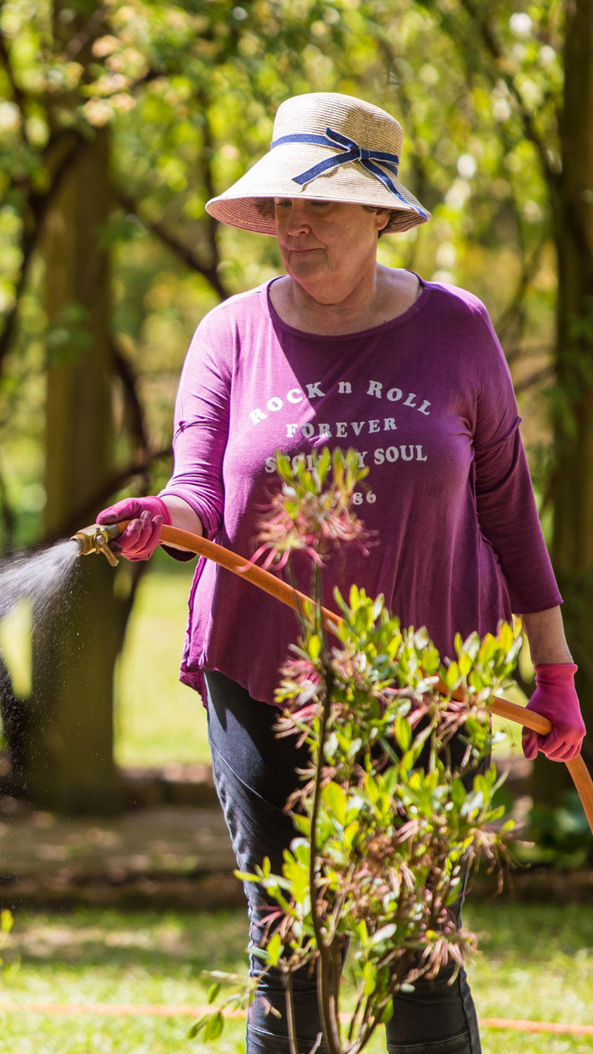 Volunteer Susan Leonard waters dogwood trees outside the Caldwell-Boylston House on the grounds of the South Carolina Governor's Mansion.
