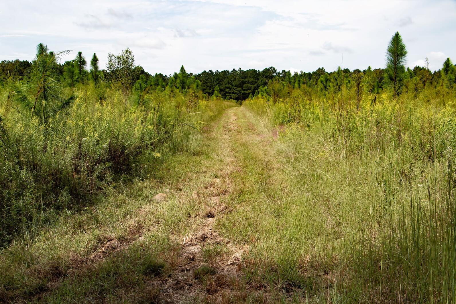 New Grassland-Woodland Trails at Beidler Forest