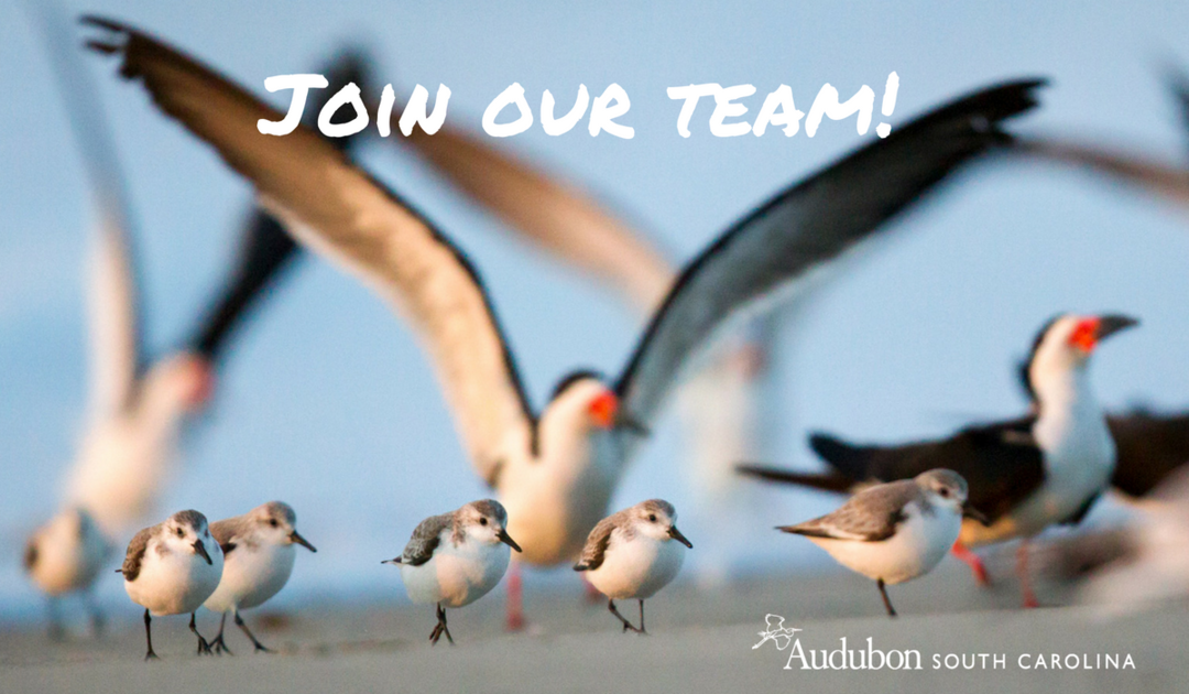 Audubon South Carolina is Hiring!