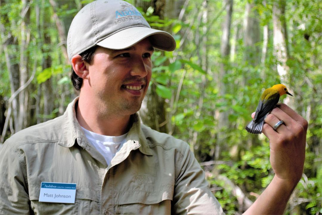 Matt Johnson holds a banded Prothonotary Warbler.