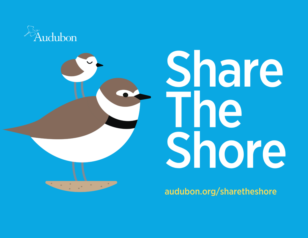 Share the Shore, plover